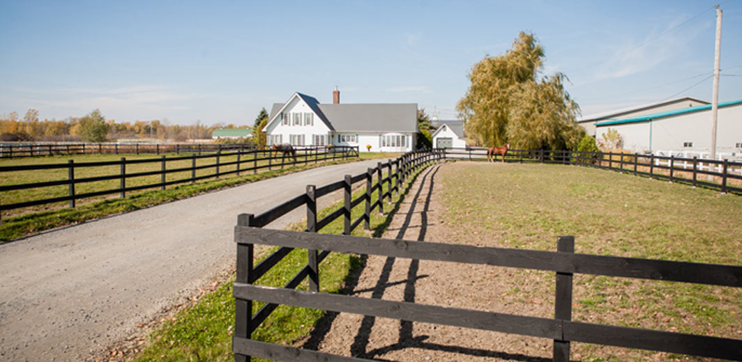 bellevue stables