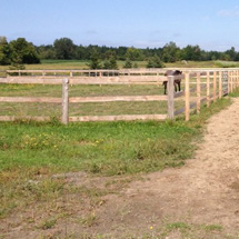 bellevue stables - outdoor riding rings and paddocks